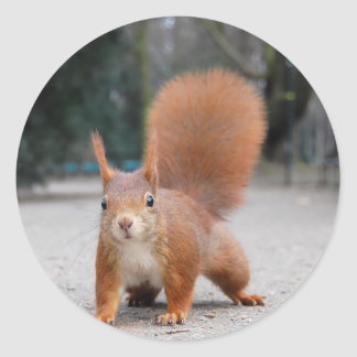 Red Squirrel Stickers