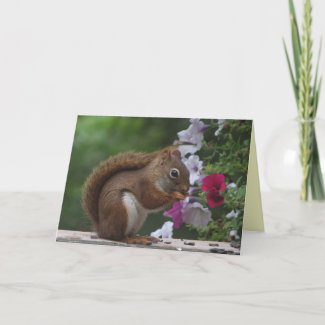 Red Squirrel Thinking of You card