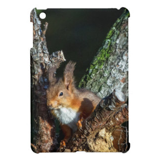Red Squirrel Up A Tree iPad Mini Case
