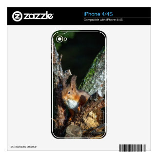 Red Squirrel Up A Tree Skins For The iPhone 4