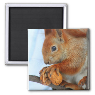red squirrel with nut magnet