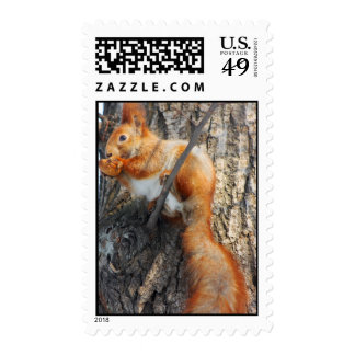 red squirrel with nut postage