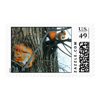 red squirrels with nut postage