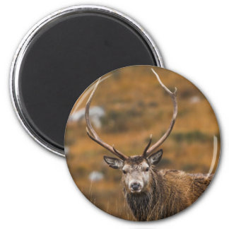 Red Stag Magnet