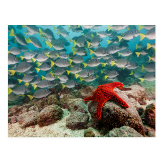 Red Starfish And Yellowtail Surgeonfish Postcard
