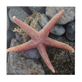 Red Starfish Beach House Decor Ceramic Tile