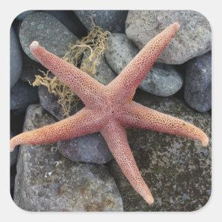 Red Starfish Beach House Decor Square Sticker