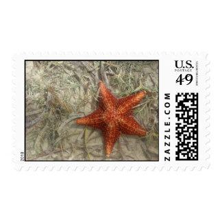 Red Starfish Stamp