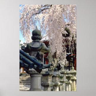 Red Stone lanterns, pink blossom, Nara, Sakura flo Posters