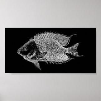 Red Stripe Fish Sea Ocean Black Silver Gray Aqua Poster