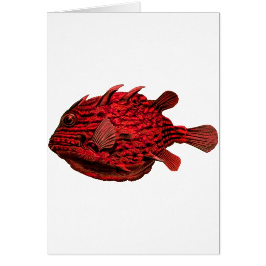 Red Striped Cowfish Card