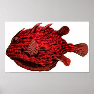 Red Striped Cowfish Print
