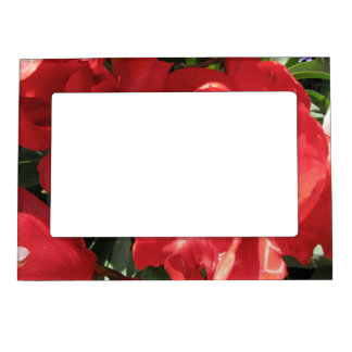 Red Sun Petals Magnetic Photo Frame