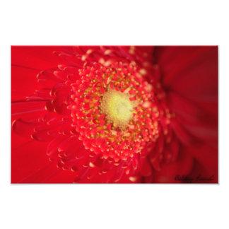 Red Sun Photo Print