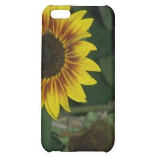 RED SUNFLOWER CASE iPhone 5C COVER