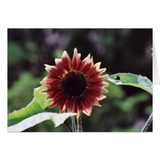 """Red Sunflower"" Floral photography Greeting Card"