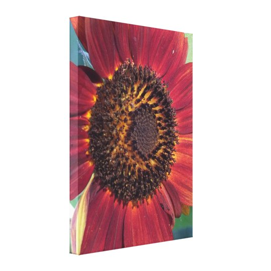 Red Sunflower Wrapped Canvas print