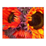 RED SUNFLOWERS POST CARDS