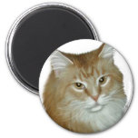 Red Tabby Maine Coon Fridge Magnet