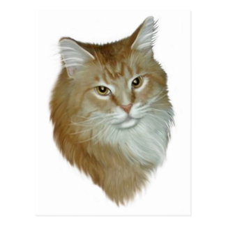 Red Tabby Maine Coon Postcards
