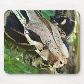 Red Tail Boa Mouse Pad