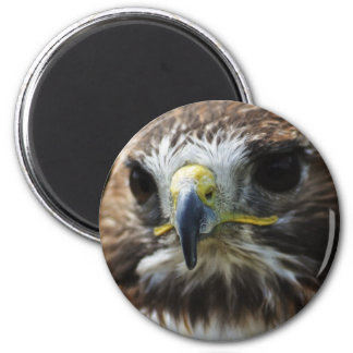 Red Tail Buzzard 2 Inch Round Magnet