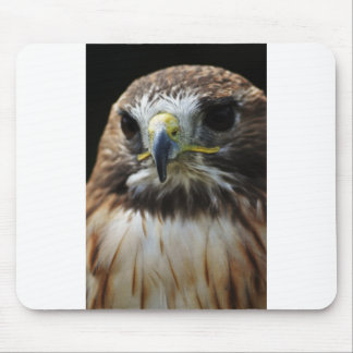 Red Tail Buzzard Mouse Pad