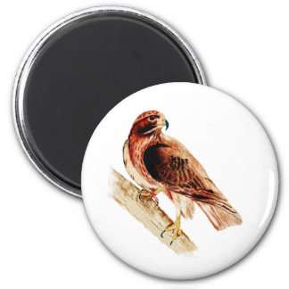 Red Tail Hawk 2 Inch Round Magnet