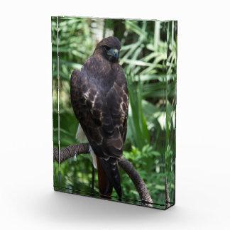 Red Tail Hawk Acrylic Award