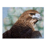 Red-tail Hawk airbrush Postcard