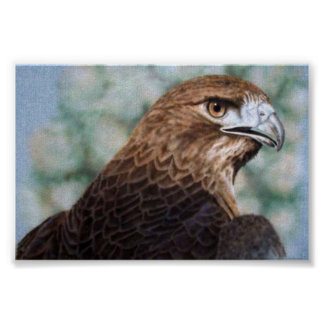Red-tail Hawk-airbrush Poster