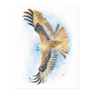 Red Tail Hawk Art Postcard