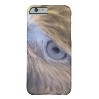 Red tail hawk barely there iPhone 6 case