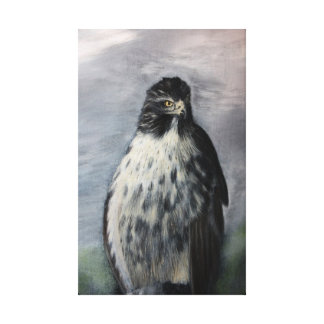 Red Tail Hawk Gallery Wrap Canvas