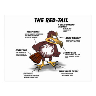 Red-tail Hawk Cartoon Postcard