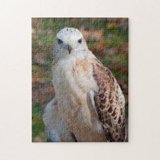 Red Tail Hawk Closeup Jigsaw Puzzle