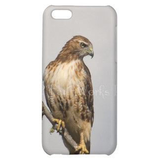 Red Tail Hawk iPhone 5C Case