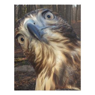 Red tail hawk letterhead