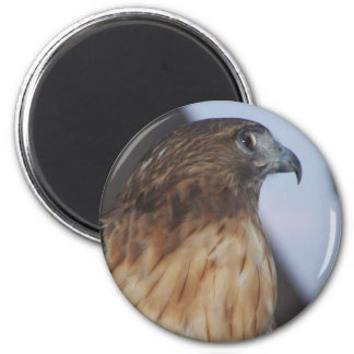 Red-Tail Hawk Magnets