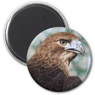 Red-tail Hawk Magnet