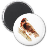 Red Tail Hawk Magnets