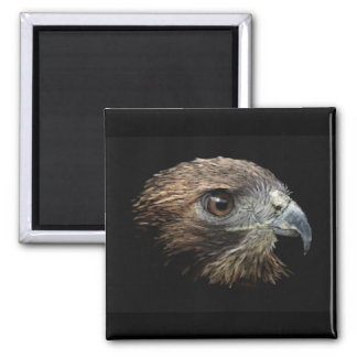 Red-tail Hawk pastel 2 Inch Square Magnet