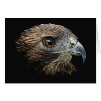 Red-tail Hawk pastel Card