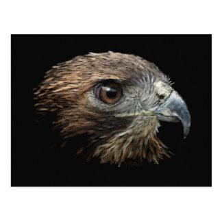 Red-tail Hawk pastel Postcard