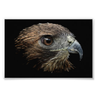 Red-tail Hawk pastel Poster