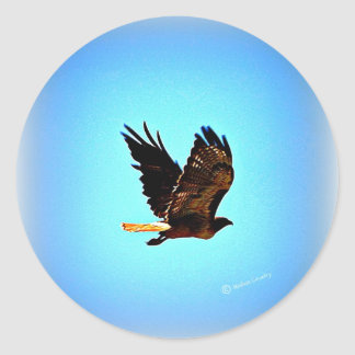 Red Tail Hawk Picture Classic Round Sticker