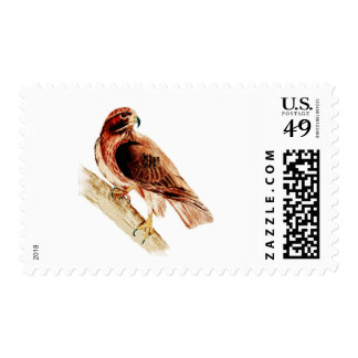 Red Tail Hawk Postage Stamp