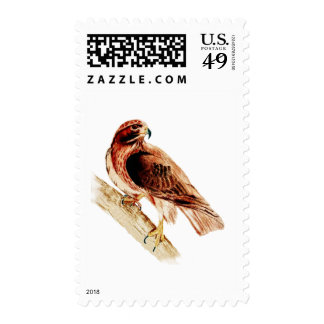 Red Tail Hawk Postage