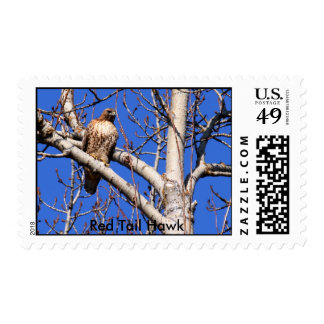 Red Tail Hawk Stamp