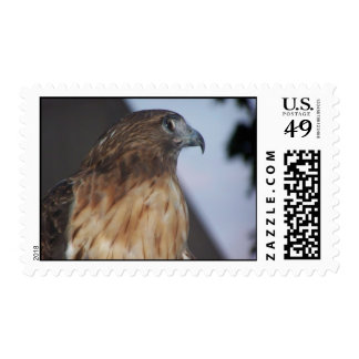 Red-Tail Hawk Postage